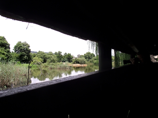 Photos from the bird hide